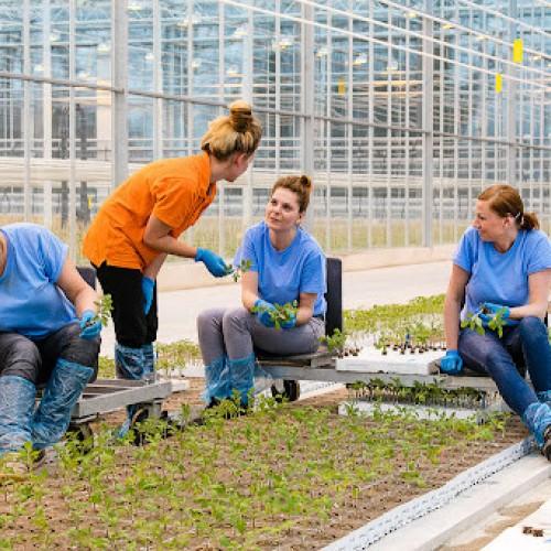 Greenhouse Gipmans NETHERLANDS